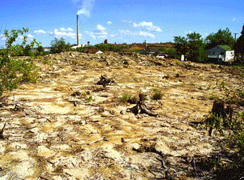 barren area with tree stumps